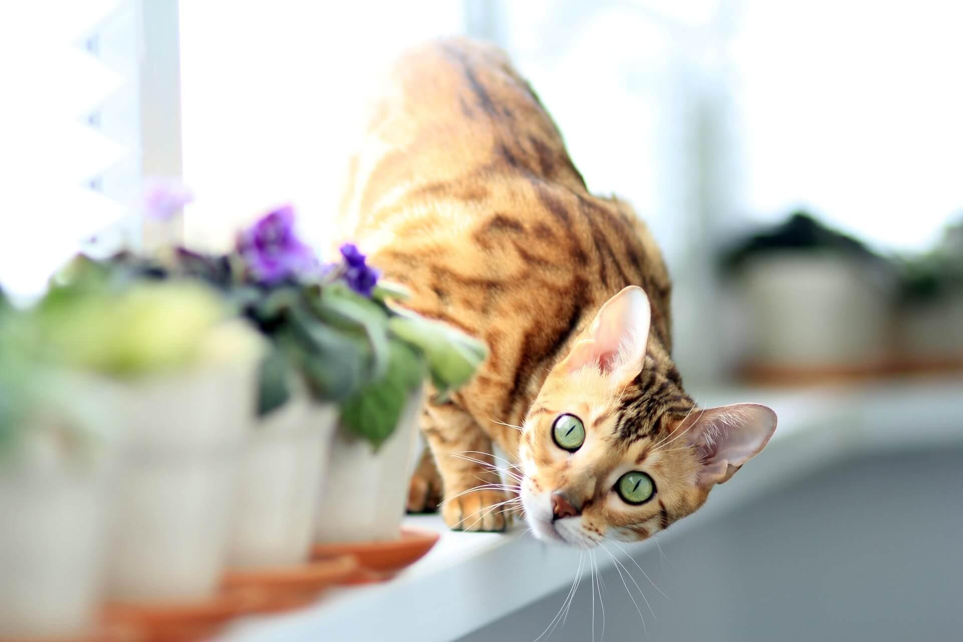 هل تهتم القطط في حال تخليك عنها - المشكلات المرتبطة بانفصال القطط المنزلية الأليفة عن أصحابها - المشكلات المرتبطة بالانفصال عند القطط