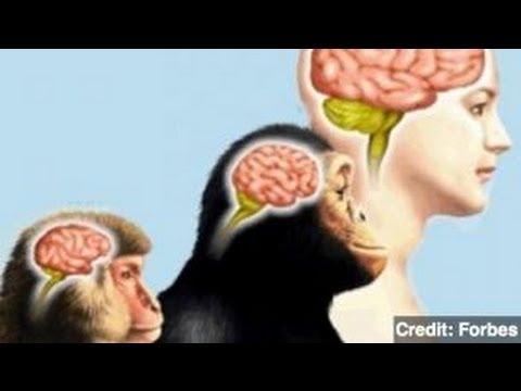 سلسلة تاريخ البشرية المقال الثالث: بداية تطور المخ البشري