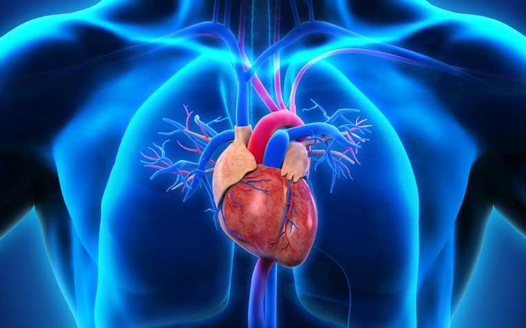 اعتلال عضلة القلب الضخامي: الأسباب والأعراض والتشخيص والعلاج