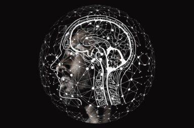 السعادة وتطور حجم الدماغ - منطقة القشرة المخية الحديثة المسؤولة عن الكلام والأحلام والتفكير - الأسباب الكامنة وراء توسع القشرة المخية - تطور الدماغ