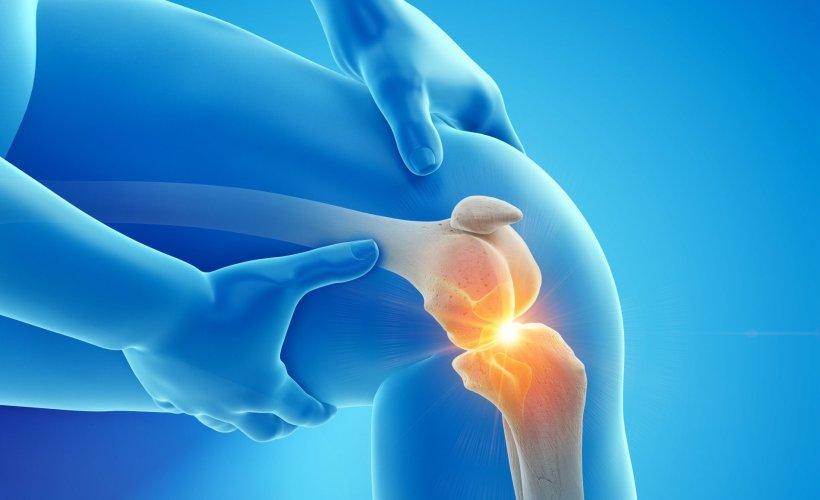 إعادة نمو غضروف الركبة: دراسات واعدة على الحيوانات - نسيج مرن زلق يسمى الغضروف المفصلي يغطي نهاية العظم المفصلية - التهاب المفاصل التنكسي