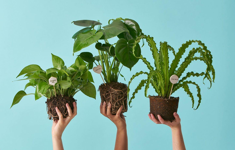 النباتات - خصائصها وما يميزها عن باقي الكائنات الحية