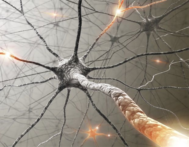 مكابح الخلايا العصبية: كيف تنتقل الإشارة الكهربائية على طول العصب؟