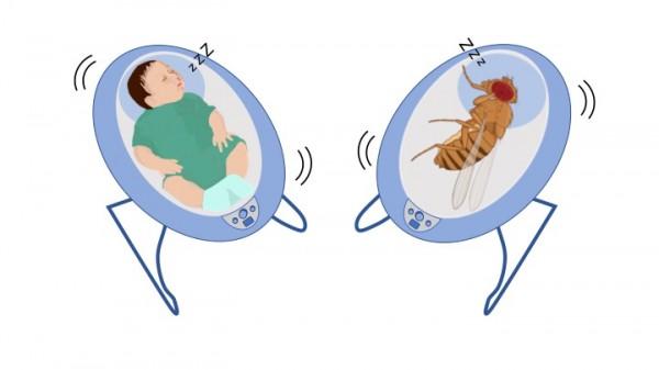 لماذا ينام الأطفال الرضع عند الهدهدة - لماذا يغرق الأطفال الصغار بالنوم بعد هدهدتهم - لماذا يشعر الأطفال الرّضع بالنعاس بعد هزهم