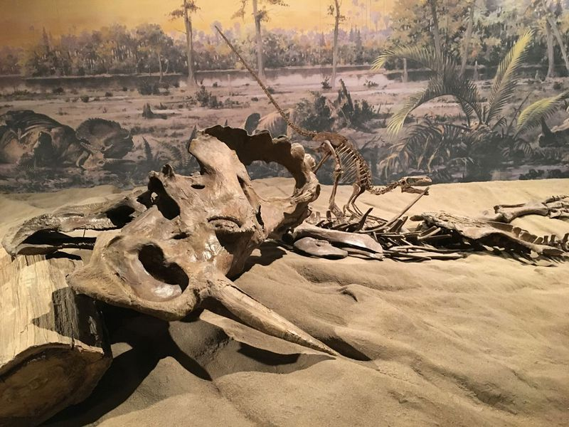 تشخيص سرطان العظام لأول مرة عند ديناصور