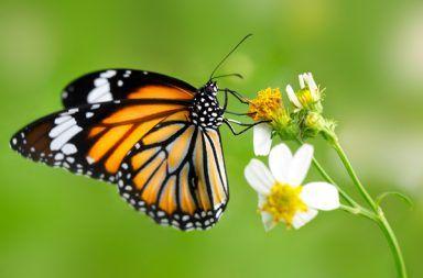 ما هي الحشرات مجموعة الحشرات في المملكة الحيوانية تشريح الحشرة مم يتكون جسم الحشرة الدبابير النحل النمل الفراشات تلقيح الأزهار