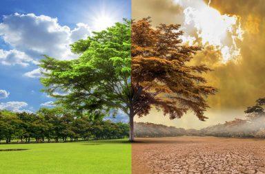 كلما اخضرّ كوكب الأرض، انخفضت وتيرة الاحتباس الحراري - تصدي البشر للاحتباس الحراري عبر زيادة الغطاء النباتي والأشجار على الأرض