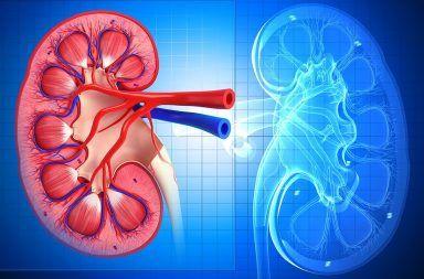 التهاب الكلية الأنبوبي الخلالي Tubulointerstitial Nephritis الأسباب اولأعراض ووالتشخيص والعلاج القصور الكلوي الفشل الكلوي