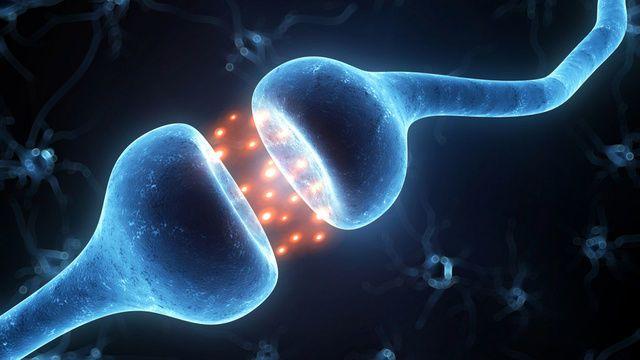 اكتشاف نوع جديد من الاتصالات العصبية في الدماغ