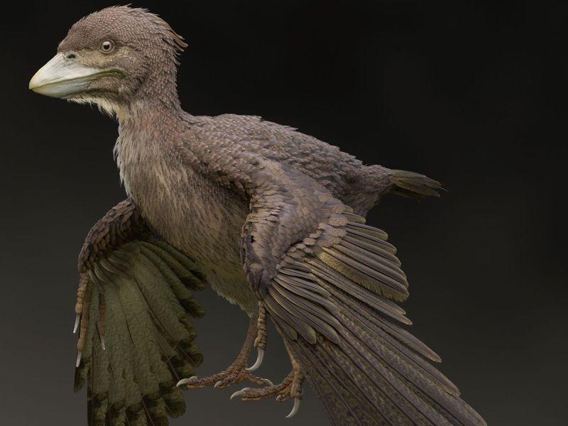 اكتشاف أحفورة تمثل حلقة وصل بين الديناصورات والطيور