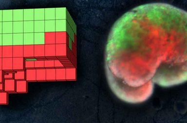 الروبوتات الأولى من نوعها المصنوعة بشكل كامل من الخلايا الحية