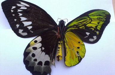 اكتشف العلماء نصف نحلة ونصف دبور في جسم واحد - ازدواجية الصفات الجنسية - غشائيات الأجنحة كالنحل والنمل والدبابير - تحديد جنس الحشرة