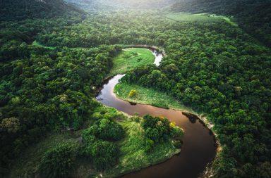 يحذر العلماء من وصول غابات الأمازون إلى نقطة اللاعودة - الأنظمة البيئية - الشعاب المرجانية في منطقة الكاريبي - الغابات الاستوائية