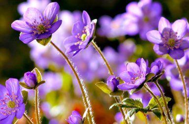 ما هي أجزاء الزهرة حبات الطلع الأسدية البتلات السبلات القلم الميسم المبيض البويضات المئبر المدقات النباتات مم تتكون الزهرة