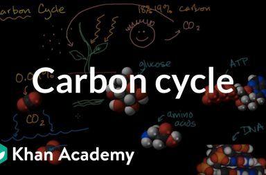 دورة الكربون في الطبيعة كيف تتنفس الكائنات الحية غاز ثاني أكسيد الكربون التنفس الخلوي تأثير الإنسان على دورة الكربون النباتات الطحالب