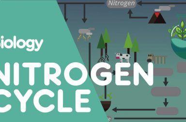 دورة النيتروجين شرح تفصيلي بالصور تثبيت النيتروجين في الغلاف الجوي الاستخدام المفرط للأسمدة المحتوية على النيتروجين البكتيريا