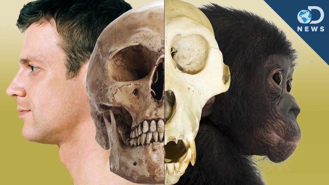 هل ما زال الجنس البشري يتطور - الانتقاء الطبيعي - البقاء للأصلح - التغير التدريجي الحاصل عند البشر مع مرور الوقت - هل لا يزال البشر يتطورون - التطور