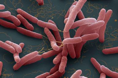 عدوى بكتيرية تسببها بكتيريا بيركهولدرية راعومية التي تعيش في تربة المنطاق الاستوائية - ما هو الراعوم وما الأعراض التي تظهر على الماصبين به؟