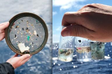 البلاستيك يغزو الكائنات البحرية والأجسام البشرية أيضًا - بقايا البوليمرات الاصطناعية الصغيرة المتسربة في الهواء والغذاء والماء
