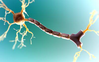 المحور العصبي والخلية العصبية