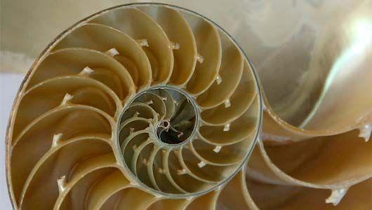 الكسيرات أو الفركتلات، أجمل الأشكال الهندسية مذهلة التي وجدت في الطبيعة