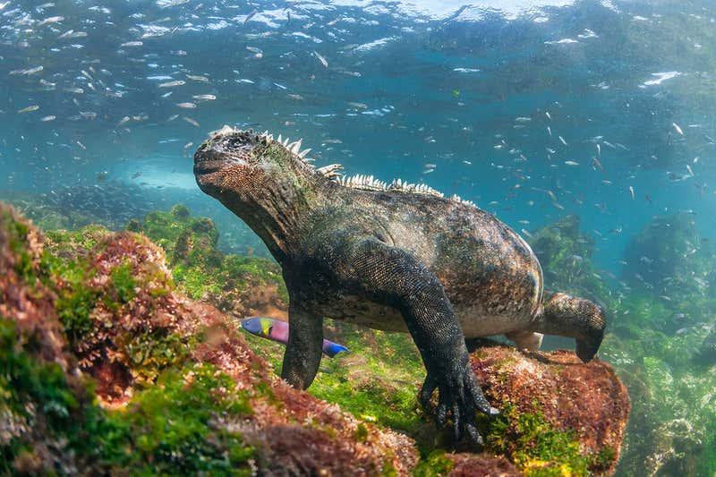 جزر غالاباغوس: مختبر التطور الطبيعي