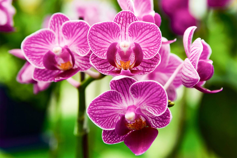 كيف سيطرت النباتات الزهرية على الأرض؟