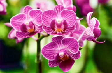 كيف سيطرت النباتات الزهرية على الأرض - السبب في الزيادة السريعة لأعداد النباتات الزهرية خلال المئة والأربعين مليون سنة الماضية