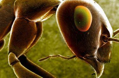 عند فناء البشرية ما هو النوع الذي سيسيطر على الأرض من هو الكائن الذي سيبقى حيًا على الأرض بعد انقراض البشر الكائنات الحية على الأرض