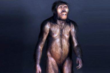 لماذا فقد الإنسان الحديث الفرو الذي كسا أسلافه - الفرضيات حول سبب تحول الإنسان إلى عاري جلد في عالم الرئيسيات - سبب وجود شعر الجسم - نمو الشعر