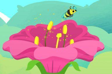 كيف تحصل عملية التلقيح في النباتات آلية التلقيح نقل حبوب اللقاح دور الحشرات في عملية تكاثر النباتات تلقيح الأزهار حبوب الطلع