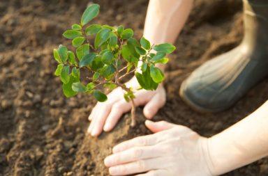 هل بإمكاننا التصدي للتغيرات المناخية بواسطة زراعة ترليون شجرة؟ - إضافة الغابات إلى العالم بإمكانه الحد من الاحتباس الحراري وتقليصه