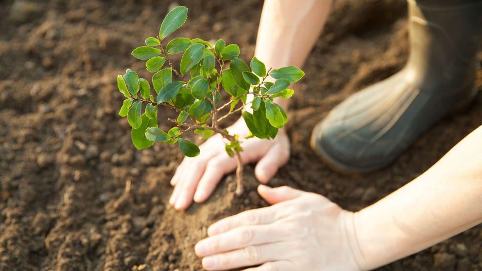 هل بإمكاننا التصدي للتغيرات المناخية بواسطة زراعة ترليون شجرة؟