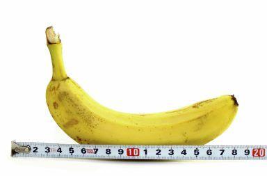 طول القشيب الطبيعي بالسنتيمتر