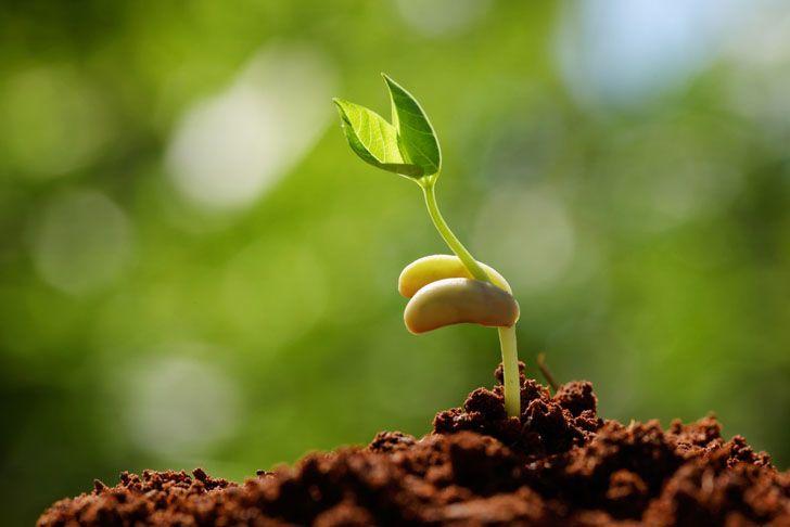 كيف تتنفس النباتات؟