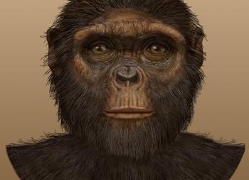 أرديبيثيكوس راميدوس - أحد أنواع البشر الأوائل الذي عاش قبل 4.4 - 4.2 مليون سنة - نوع من أصلاف البشر عاش الأشجار بحثًا عن الطعام والمأوى