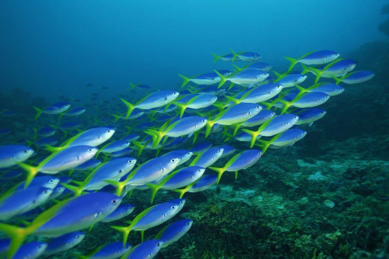 كيف تتنقل الطيور والأسماك في مجموعات كبيرة دون ان تنفصل او تتصادم ؟