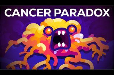 لماذا لا تصاب بعض الحيوانات بالسرطان؟ حل مفارقة بيتو لفهم أفضل للسرطان - اختلاف معدل الإصابة بالسرطان بين الكائنات الحية - مفارقة