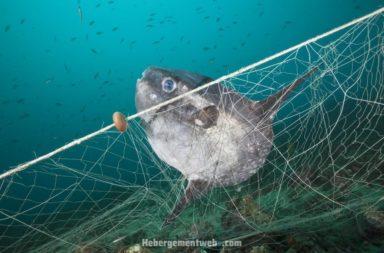 هل خلو المحيطات من الأسماك بحلول عام 2048 صحيح؟ هل ستختفي جميع الأسماك ستختفي من المحيطات والبحار بحلول عام 2048 ما يقول البعض؟