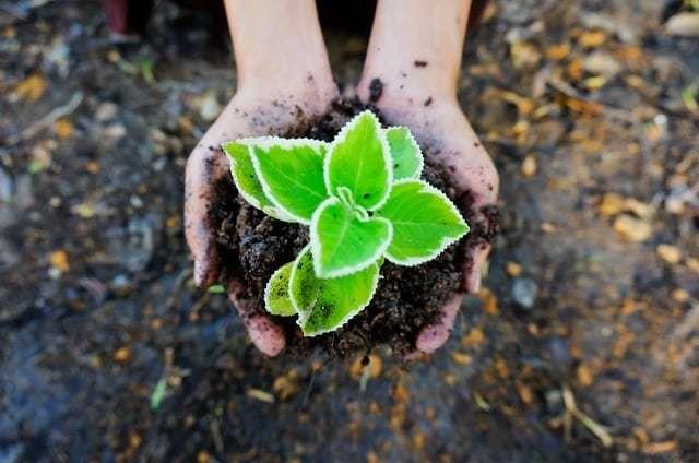 ما هو علم البيئة ؟