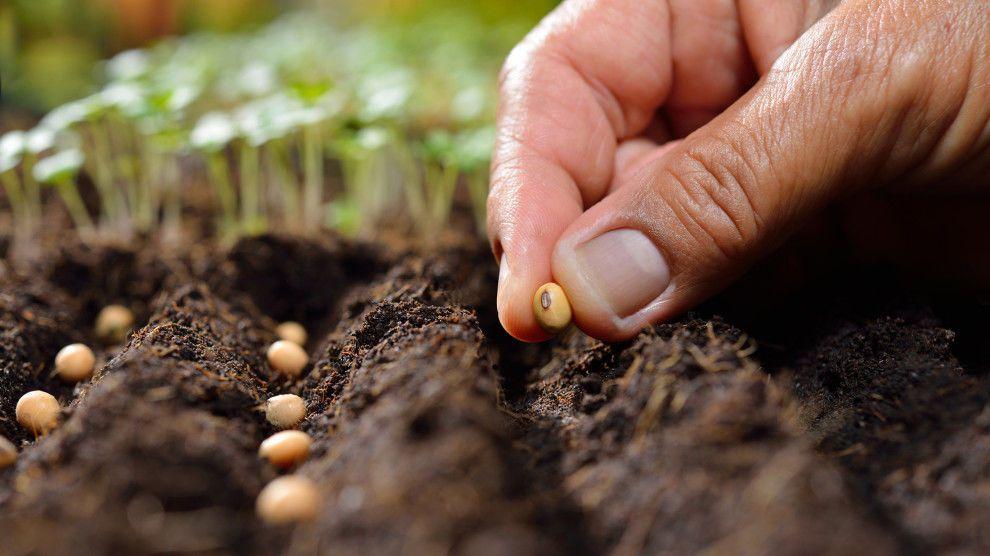 البذور - ما هي أجزاء البذرة ومما تتركب ؟