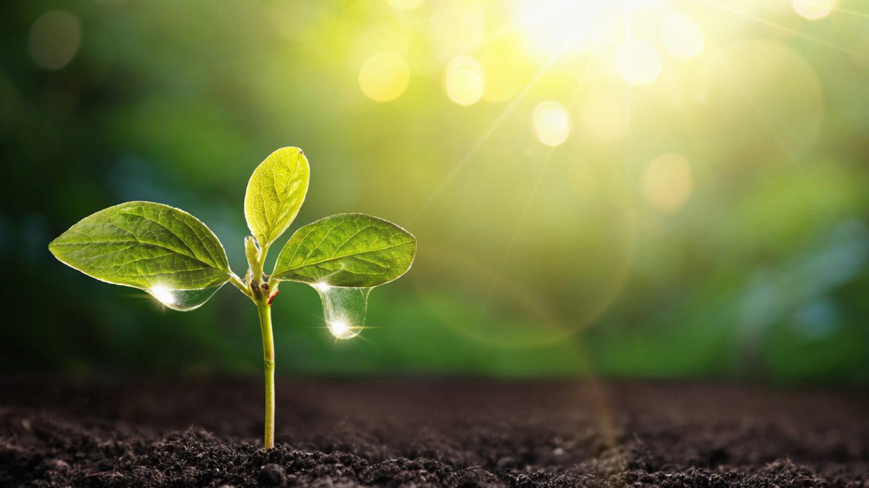 تربة ذاتية الري تجمع الماء من الهواء وتغذي النباتات ستغير مفهوم الزراعة