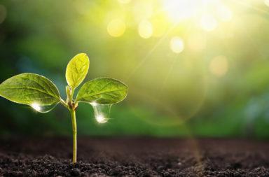 تربة ذاتية الري تجمع الماء من الهواء وتغذي النباتات ستغير مفهوم الزراعة - سحب الماء من الهواء وتوزيعه على النباتات - تربة الهيدروجيل