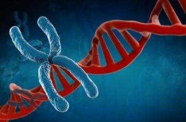 كم عدد الكروموسومات في جسم الإنسان الحمض النووي الخلايا النواة الخلية الحية الإنقسام الخلوي الكائنات الحية البروتينات تكاثر الخلايا