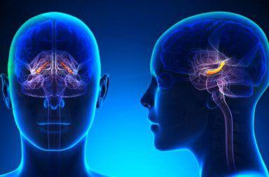 الدماغ يعيد استشارة نفسه قبل اتخاذ أي قرار ترسيخ الذكريات الجديدة استخدام التفكير المجرد دور الحصين في تثبيت الخبرات والتجارب الجديدة
