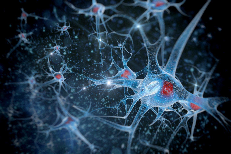 اكتشاف غير متوقع  يمكن لدماغ شخص بالغ تجديد بعض الخلايا العصبية!