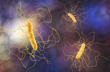عدوى المطثية العسيرة والمعروفة أيضًا باسم C. difficile أو C. diff الأسباب والأعراض والتشخيص والعلاج جراثيم تصيب الأمعاء وتسبب الإسهال