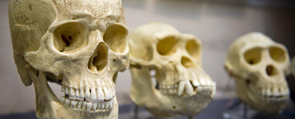نظرية التطور ما زالت فاعلة ، أدلة على أننا ما زلنا نتطور