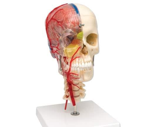 استئصال جزء من الجمجمة بعد التعرض للإصابات قد ينقذ الحياة