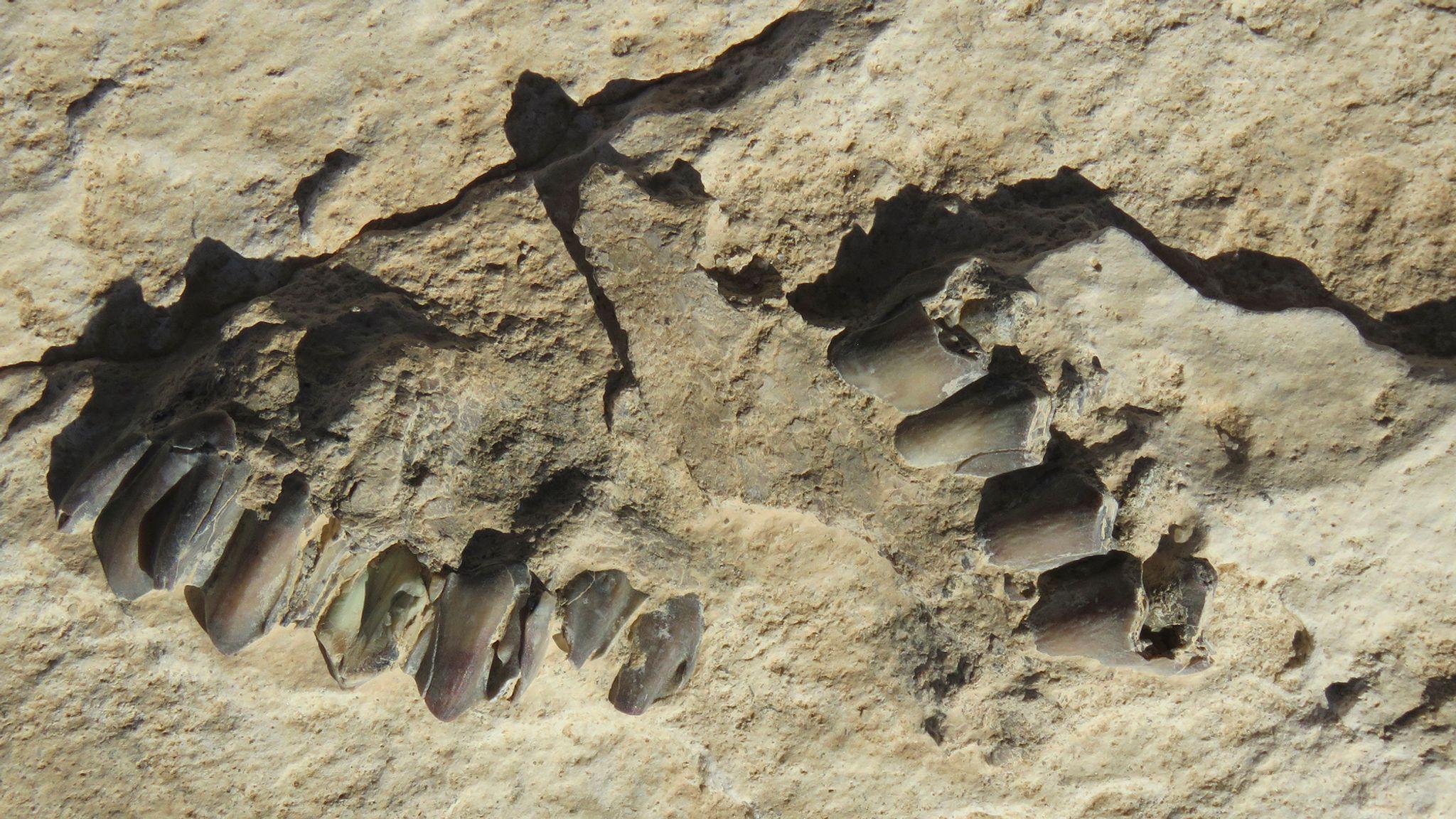 العثور على آثار أقدام بشرية في شبه الجزيرة العربية يعود تاريخها 120 ألف عام - اكتشاف آثار أقدام بشرية وحيوانية قديمة في صحراء النفود